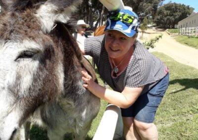 A donkey at Hamilton Russel wine tasting on a wine-walk