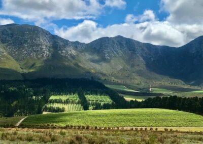 Bosman vineyards